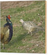 Mr And Mrs Pheasant Wood Print