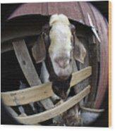 Mr B Goat Wood Print