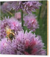 Mr Bee On My Chives Wood Print