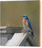 Mr Blue Bird Wood Print