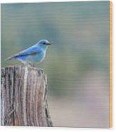 Mr. Bluebird Wood Print
