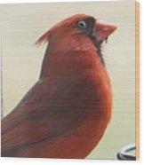 Mr Cardinal Wood Print by Maxine Billings