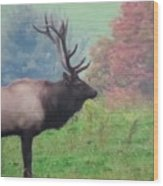 Mr Elk Enjoying The Autumn Wood Print