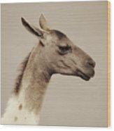 mr Llama Wood Print