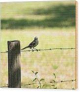 Mr. Mockingbird Wood Print
