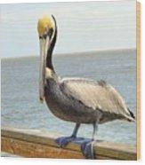 Mr. Pelican Wood Print