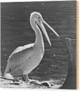 Mr Pelican Wood Print