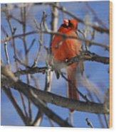 Mr. Red Beauty Wood Print