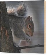 Mr S Snacking Wood Print