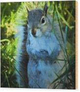 Mr. Squirrel Wood Print