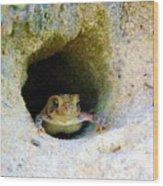 Mr. Toads Sand Castle Wood Print