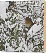 Mrs Cardinal In The Jasmine Wood Print