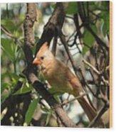 Mrs Cardinal Wood Print