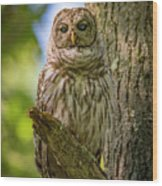 Mrs. Owl Wood Print