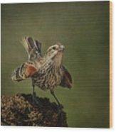 Mrs. Red Winged Blackbird Wood Print