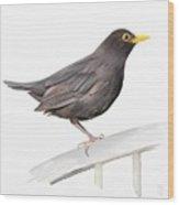 Ms. Blackbird Is Brown Wood Print