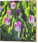 Msu Spring 2 Wood Print