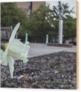 Msu Spring 22 Wood Print
