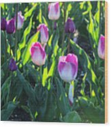 Msu Spring 3 Wood Print
