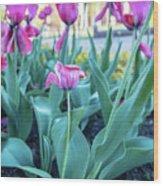 Msu Spring 33 Wood Print
