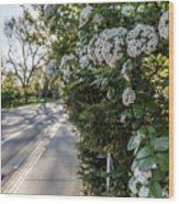 Msu Spring 43 Wood Print