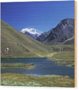 Mt Aconcagua And Laguna Horcones Wood Print