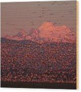 Mt Baker Snow Geese Wood Print