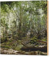 Mt Field Forest Wood Print