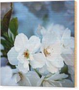 Mt. Fuji Cherry Blossoms Wood Print
