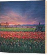 Mt. Hood And Tulip Field At Dawn Wood Print