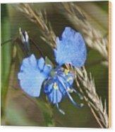 Mt. Lemmon Flower Wood Print