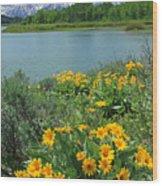 Dm9225-mt. Moran And Arrowleaf Balsamroot  Wood Print