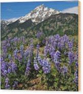 Mt. Teewinot And Lupine Wood Print