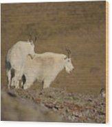 Mtn.goats Wood Print