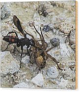 Mud Dauber Wasp And Prey Wood Print