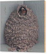 Mud Nest  Wood Print by Pamela Walrath