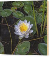 Mudd Pond Water Lily Wood Print