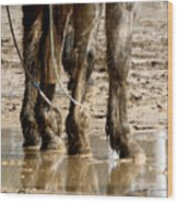 Muddy Reflections.. Wood Print