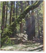 Muir Wood Wood Print