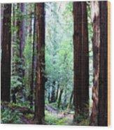 Muir Woods 1 Wood Print