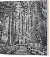 Muir Woods Bw Wood Print