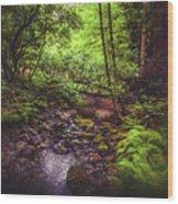 Muir Woods No. 3 Wood Print