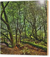 Muir Woods Rejuvenation Wood Print