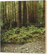 Muir Woods Sentinels Wood Print