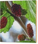 Mulberry Season Wood Print