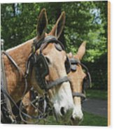 Mule 5 Wood Print