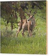 Mule Buck Deer Wood Print