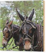 Mule Days 2 Wood Print