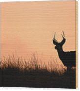 Mule Deer Buck Against South Dakota Sunset Wood Print
