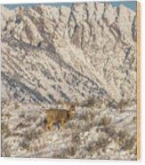 Mule Deer Buck In Winter Sun Wood Print